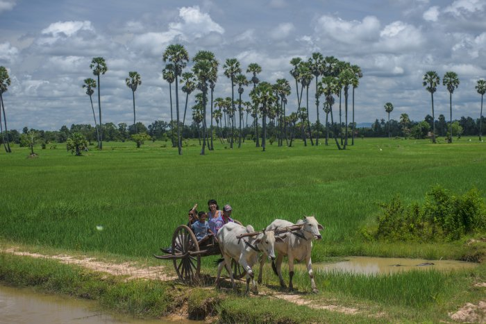Cambodia Chansor Village Ox Cart