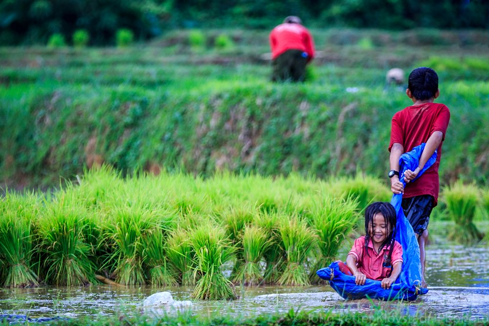 Laos rice field - Khmu girl