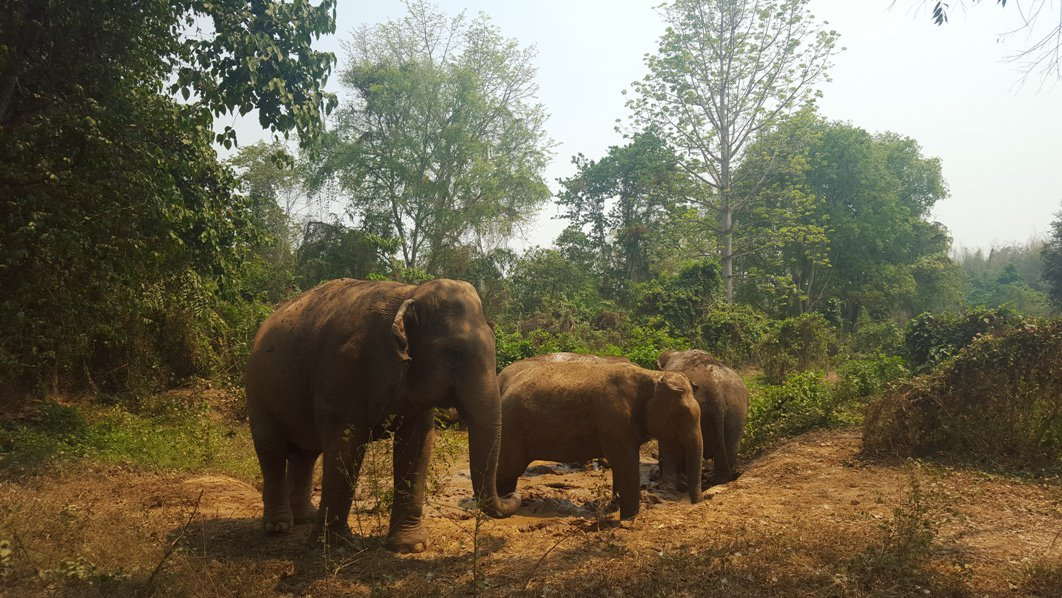Sai Yoke Elephant Haven - Kanchaburi - Thailand