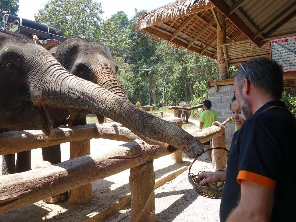 Sealand Phuket Camp - Elephant Feeding - Thailand