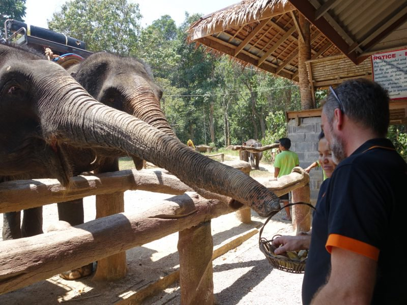 Elephant Feeding Sessions