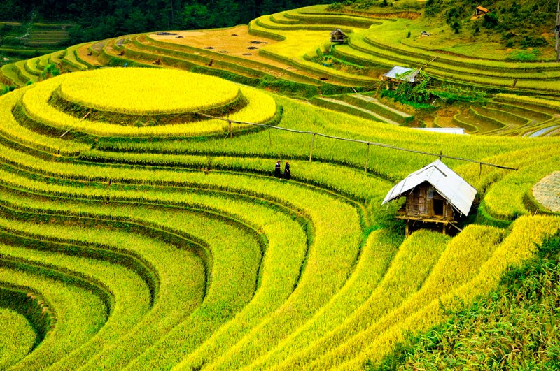 autumn in asia - Sapa Vietnam rice field