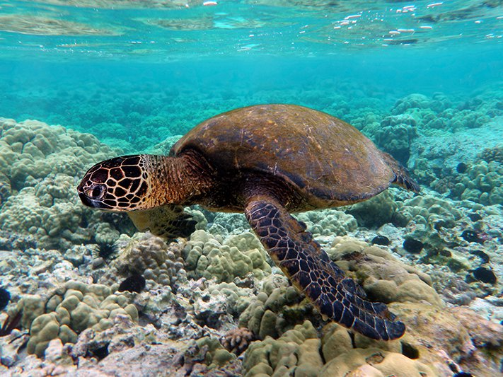 What NOT to Eat in Asia - Green Sea Turtle