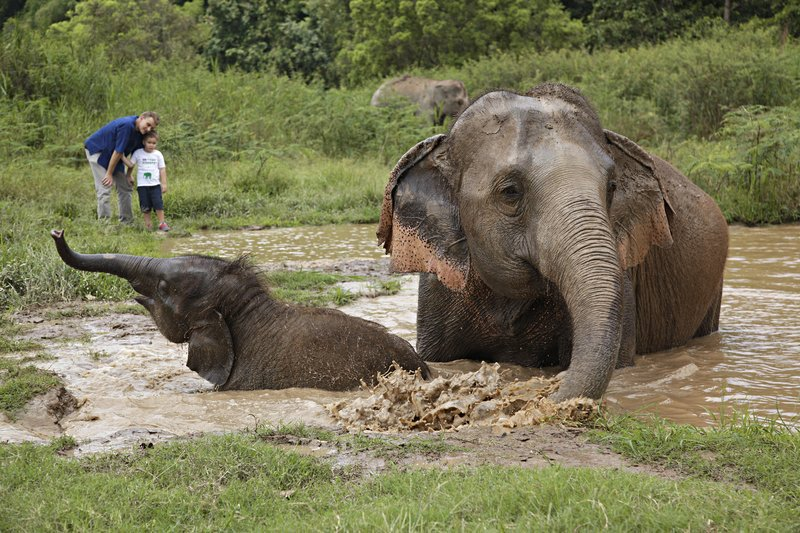 Malte Blas - Best Resorts for Families in Asia - Anantara Elephants