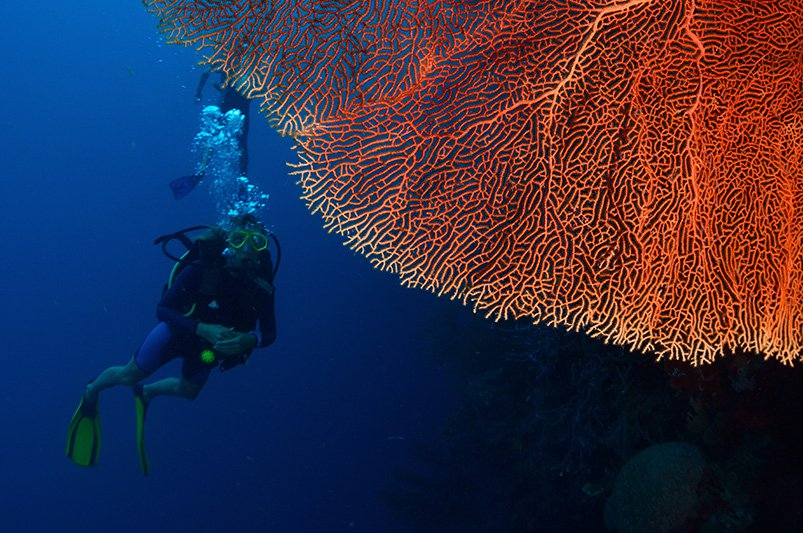 Malte Blas - Best Dive Spots in Asia - Indonesia